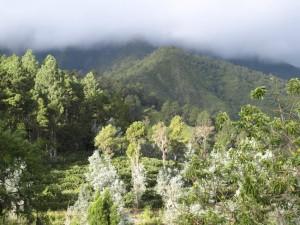 Reserva científica de Valle Nuevo
