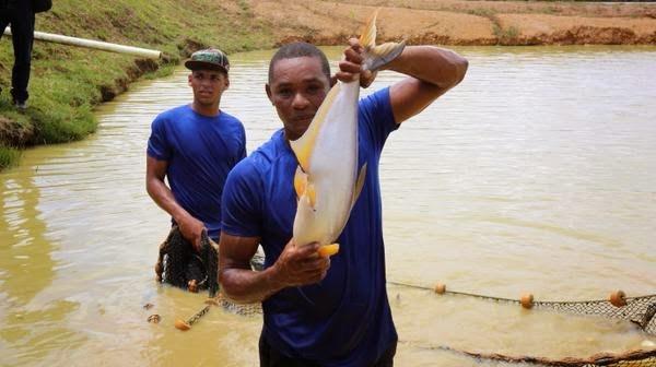 Proyecto Pesca