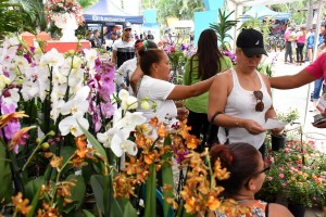 Jarabacoa celebra festival de las flores