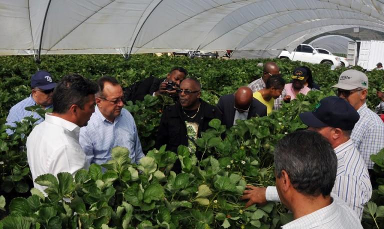 Quieren desarrollar agricultura en Haití