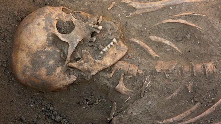 equeleto humano