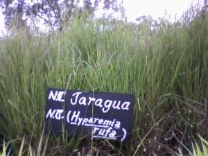 Parque Nacional Jaragua