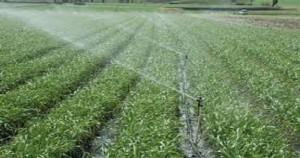 Plantaciones agrícola
