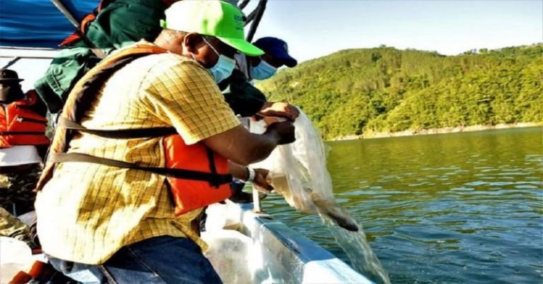 Egeehid lanza alevines en presa Jiguey-Aguacate
